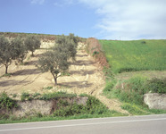 Roadside Hill, Interior Sicily  2002